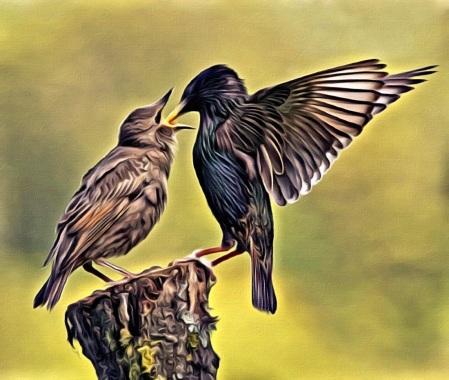 Bird feeding bird