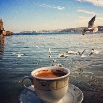 Seagull Tea