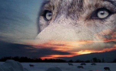 Wolf horizon